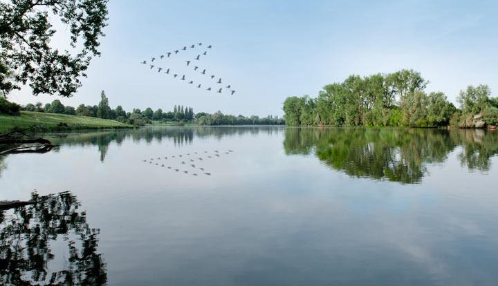 Vögel fliegen in Herzfomation über Landschaft